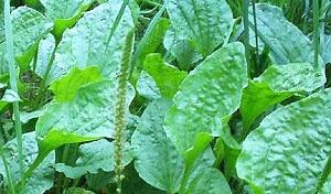 Растения при ранах