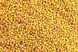 Семена горчицы сарептской