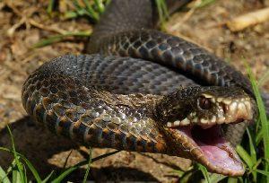 Укус змеи фото Гадюка