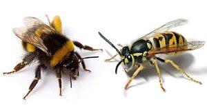 Оказание первой помощи приукусе пчел