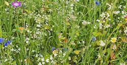Противопоказания лекарственных трав